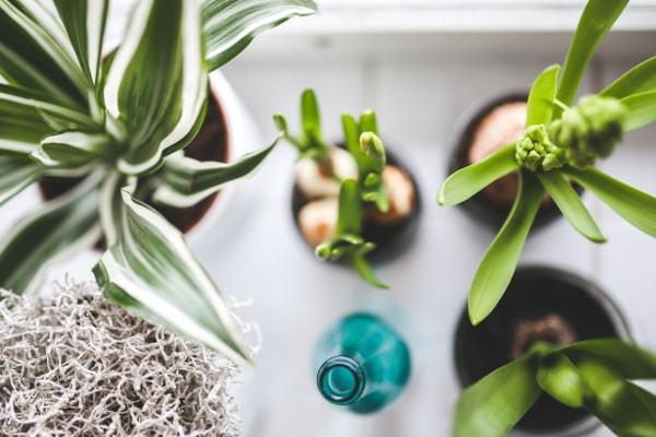 zielone rośliny domowe w bardzo dobrym stanie