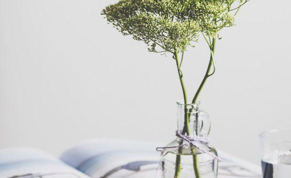 roślina w czystej i zdrowej wodzie po analizie wody